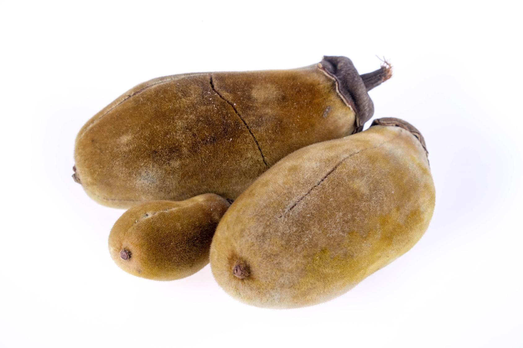 Baobabfrucht