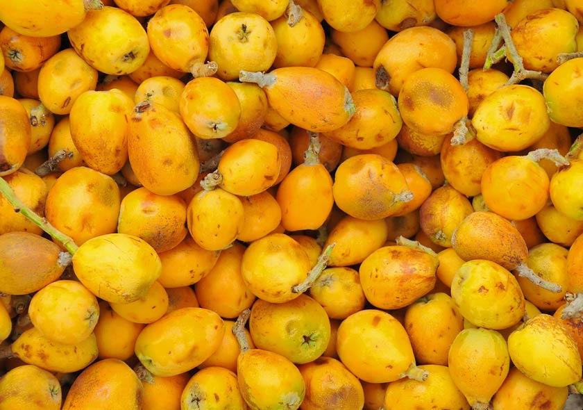 Marulafrüchte | © Jaroslaw Grudzinski, fotolia.com
