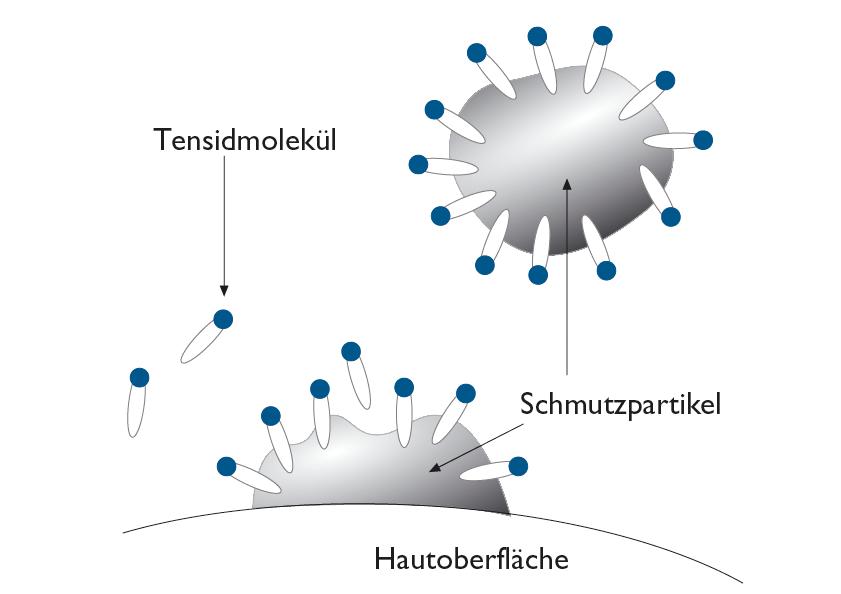 Arbeitsweise von Tensiden | © Heike Käser