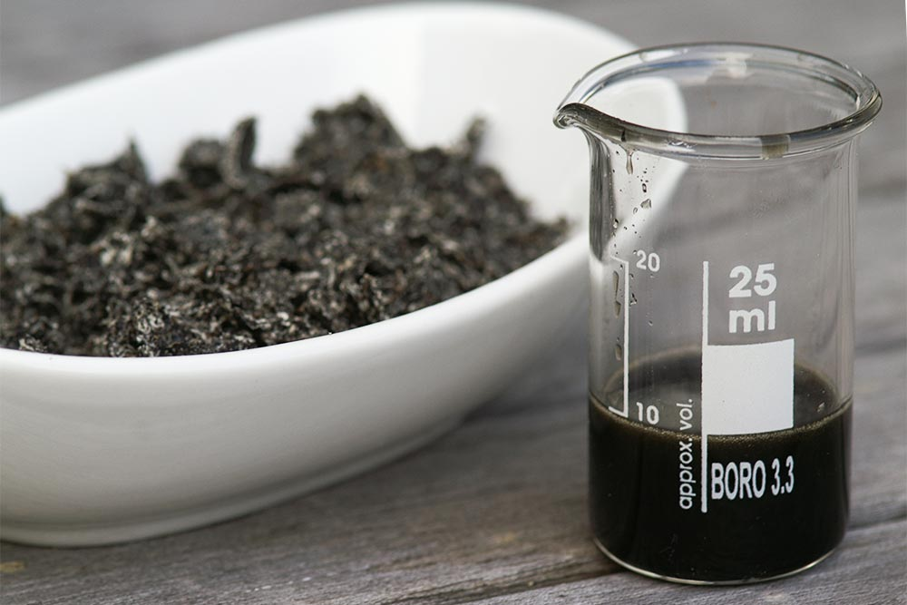 Frisch gepresstes Schwarzkümmel-Truböl mit Trester